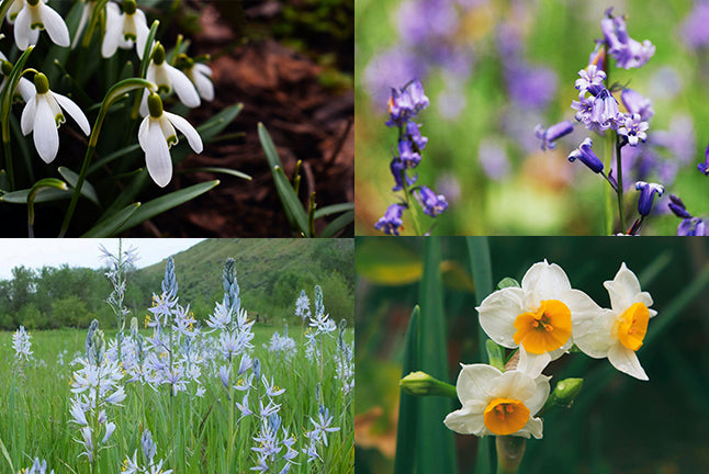 Spring Flower Grid Image Unsplash Camassia Narcissus Snow Drop