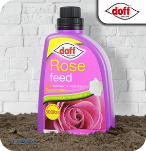 Doff Liquid Rose Feed Concentrate - 1 Litre