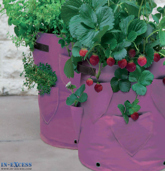 Two Pink Haxnicks Strawberry Garden Herb Patio Planters