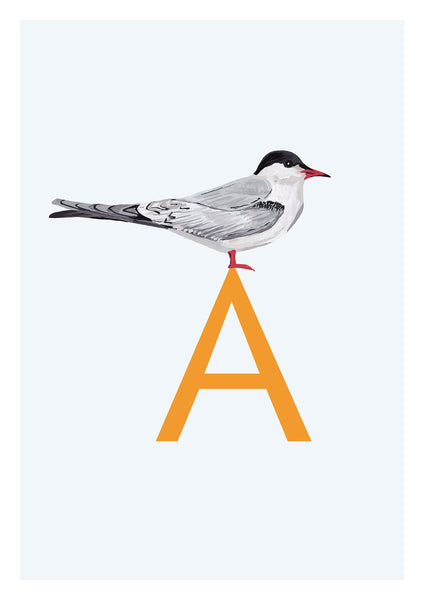 Bird Alphabet Print - Archival digital giclee print