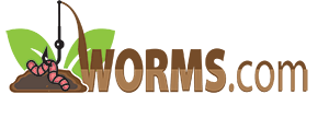 Worms.com  - LIVE Worms for sale!