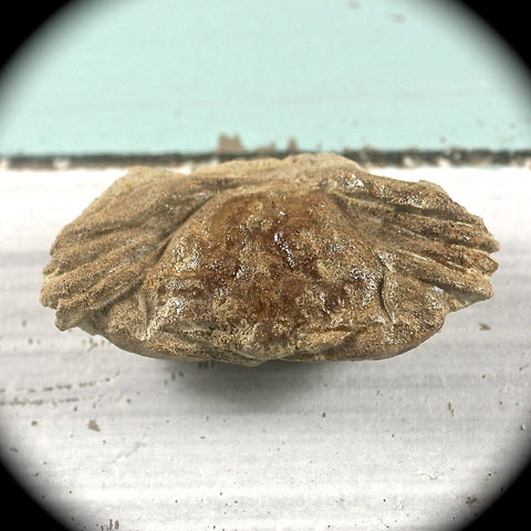 Fossil Crab - Rusmineral cabochons&jewelry
