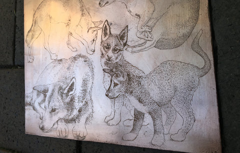 "sneak peak of copper plate etching 'Dingo Tales"" by CAE carol ann edelkoort"