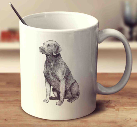 Chesapeake Bay Retriever Sketch