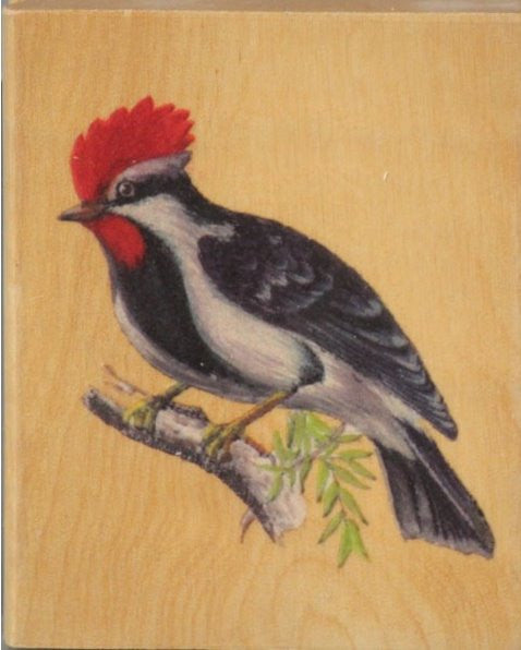 Nicole Crafts Bird Mounted Rubber Stamp - SCRAPBOOKFARE