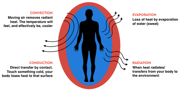 convection, conduction, radiation and evaporation on the body