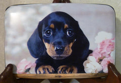 Wallet - Dachshund Puppy