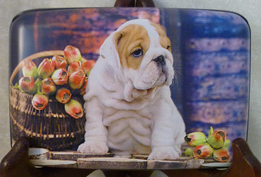 Wallet - Bulldog Puppy