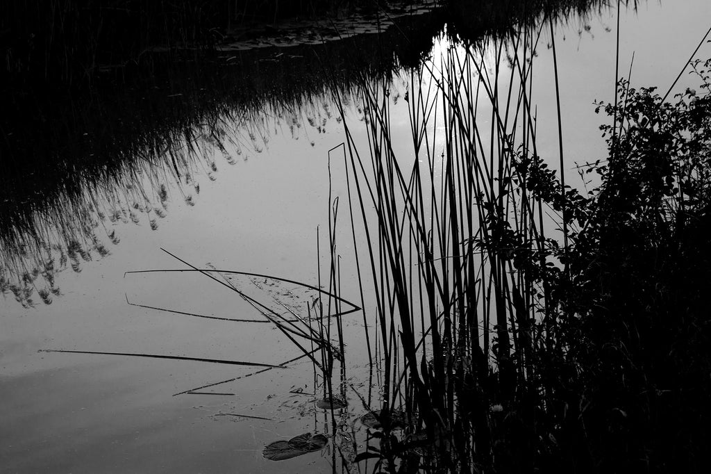 Abstract Reeds, Fenland, Monochrome, lyrical composition