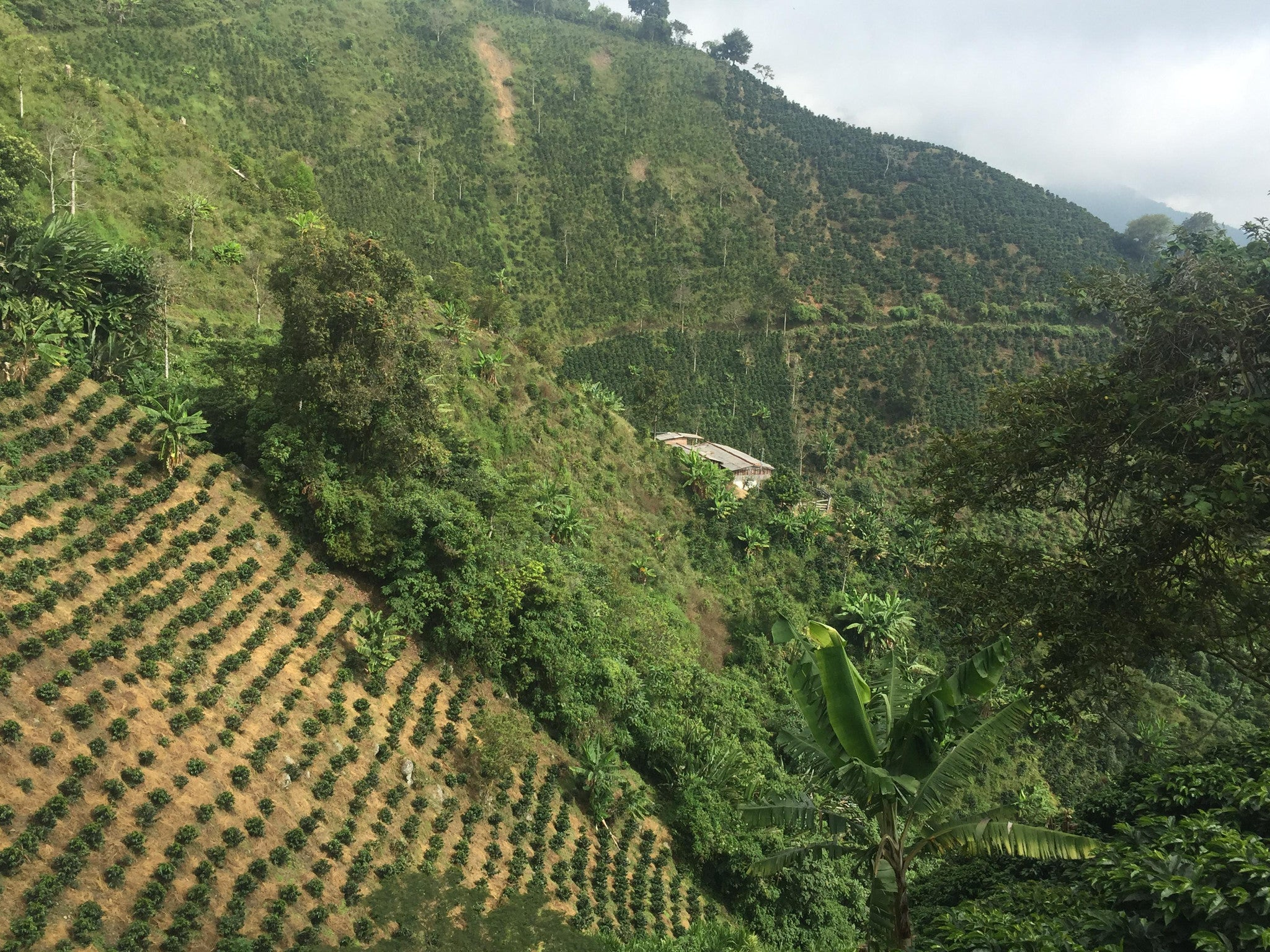 El Chivero - Colombia - Gardelli Specialty Coffees