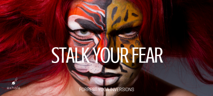 Stalk your fear