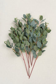 Seeded Oval Eucalyptus