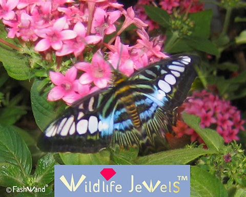 "Wildlife Jewels® ""Azurite The Butterfly"""