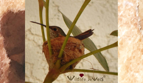 Hummingbirds: Incredible Designers & Architects