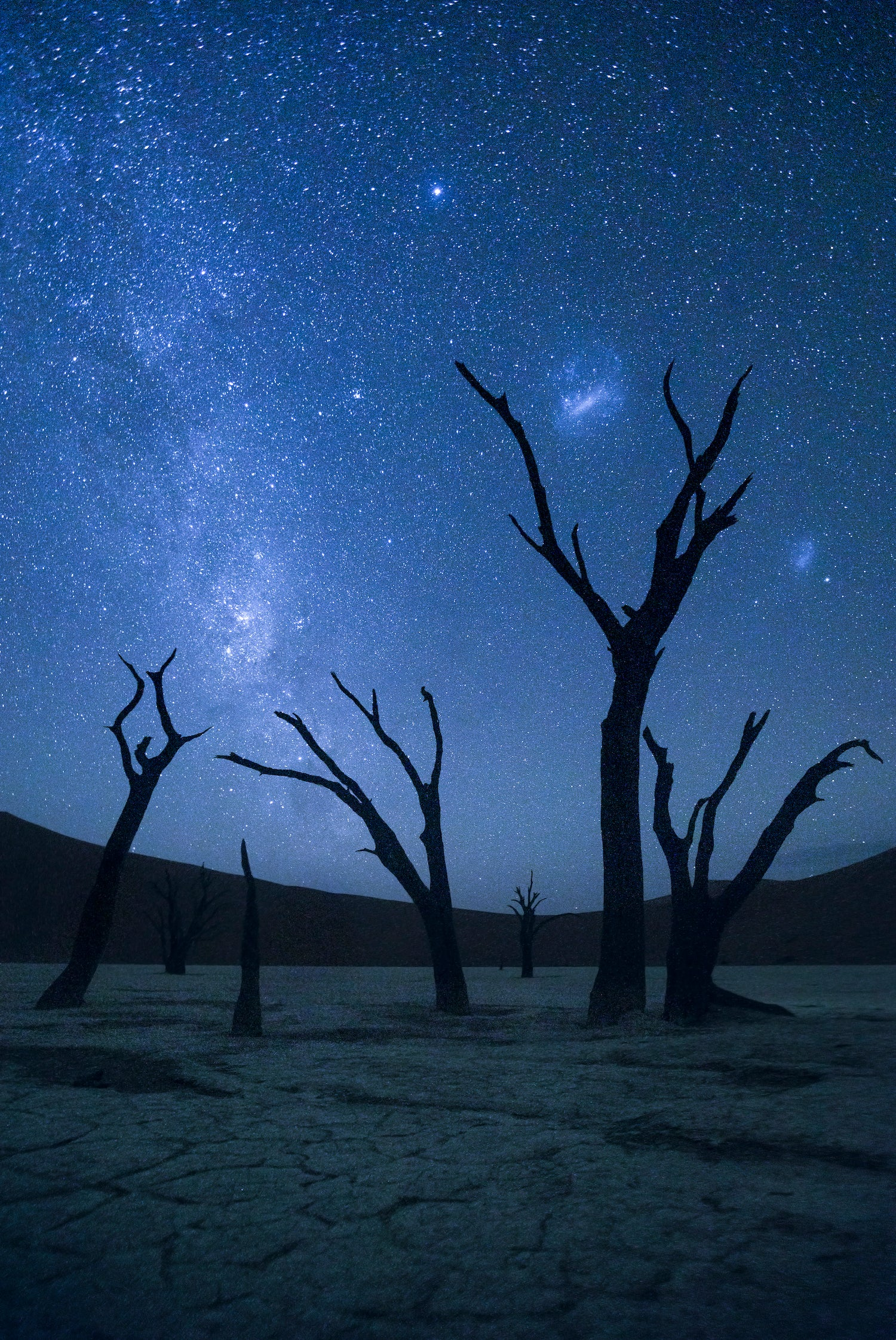 Ancients of Deadvlei