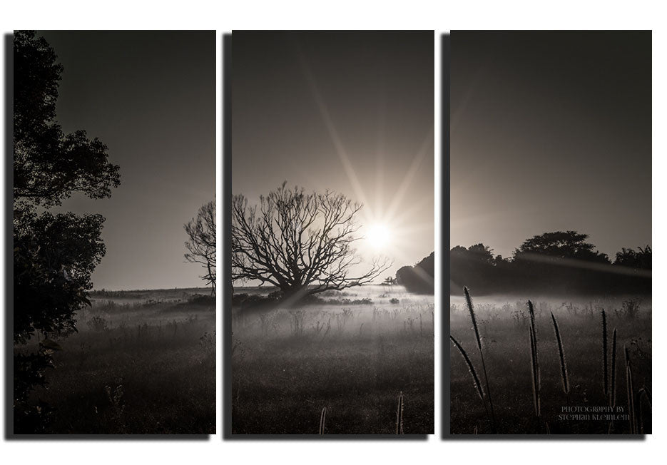 Early Morning - Triptysh