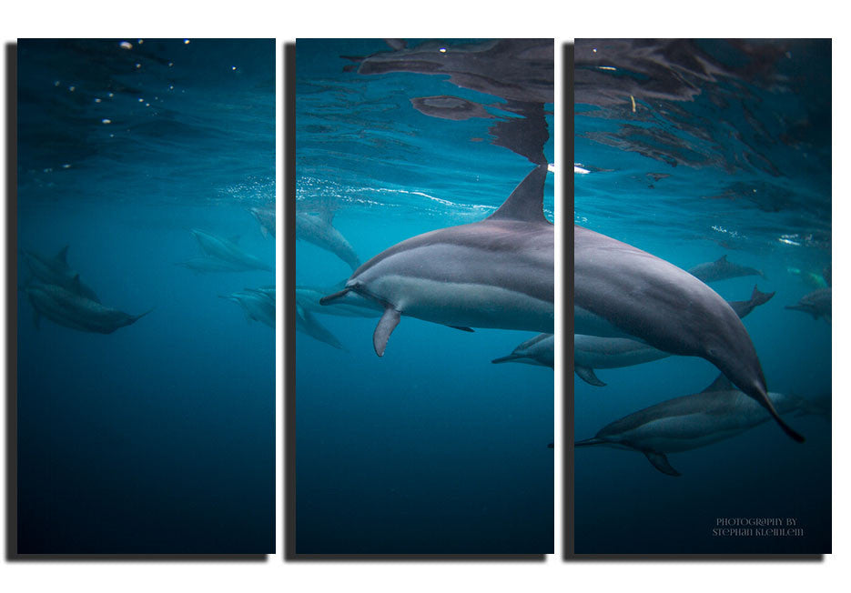 Mauritius Dolphins - Triptych