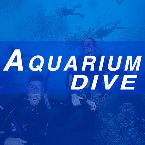 Aquarium Dive - November 20, 2016 - 2:45 p.m.