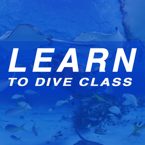 Learn to Dive Class - January 3, 2016 – Arlington
