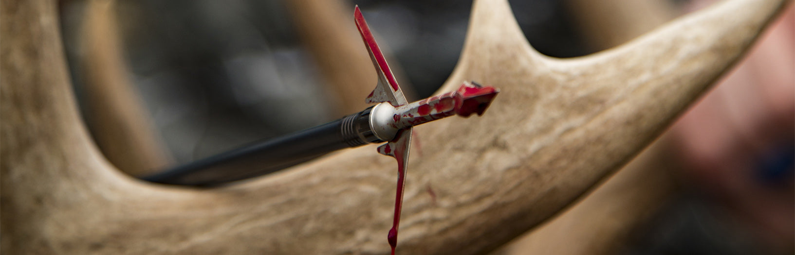 Slick Trick Broadheads - raptortrick mechanical broadhead