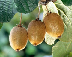 Fruit tree seeds