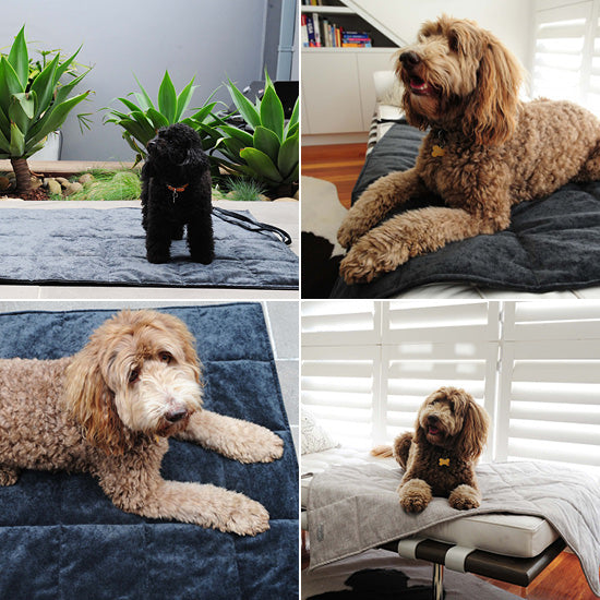 Viaggio-Dog-Bed-and-Travel-Mat-by-Sasha-and-Me-Shop-It-Pretty-Fluffy