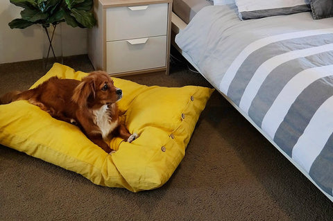 Image of Mano Designer Dog Bed