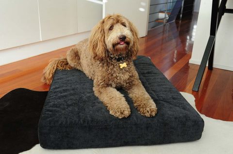 Image of Dog on Organic Bed
