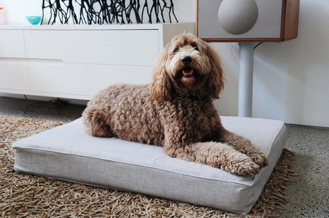 Comfortable Dog Beds
