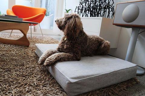 Image of Designer Dog Beds