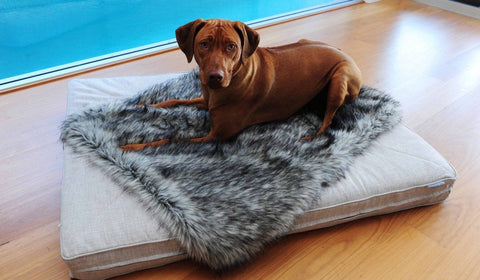 Image of Designer Dogs Blanket