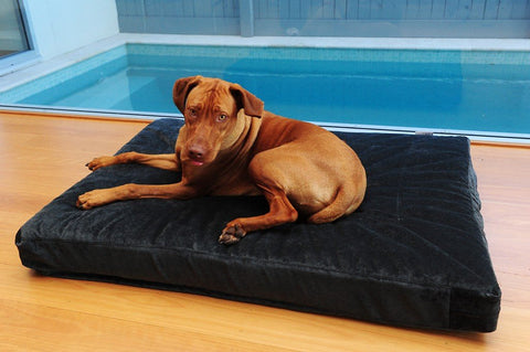 Dog at Designer Beds