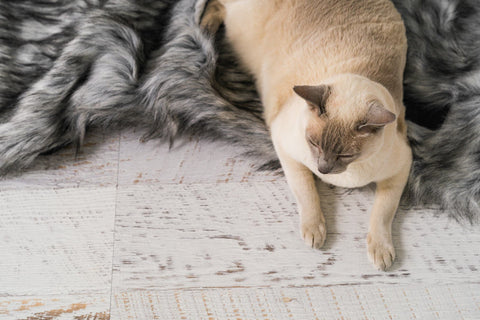The durable and comfortable Reposo cat blanket