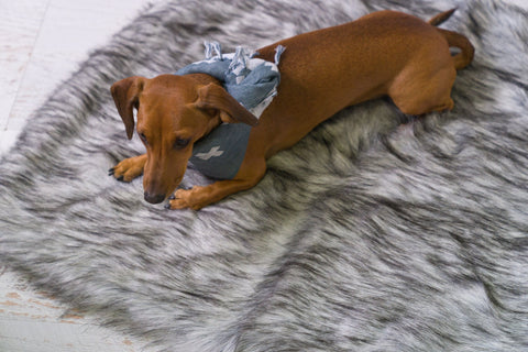 The stylish and durable Reposo dog blanket