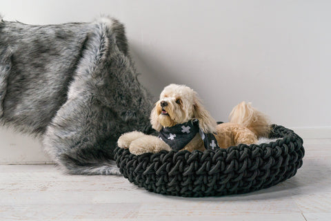Sturdy and stylish - The Corda 2 dog basket