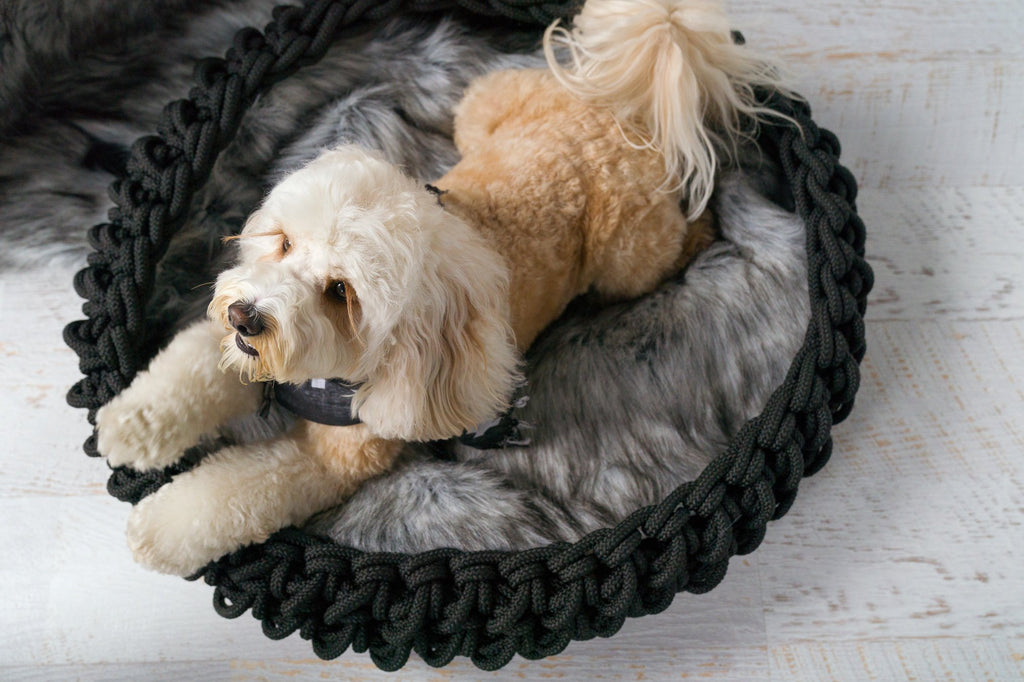 The Corda 2 dog basket - chew proof, waterproof and organic