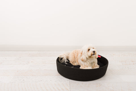 Image of Introducing the durable Corda rope basket for dogs