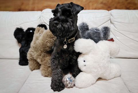 Image of Toys for Pets