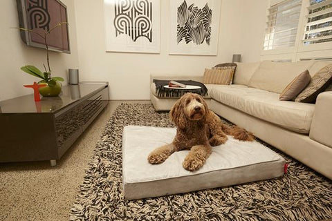 White Velluto Dog Beds