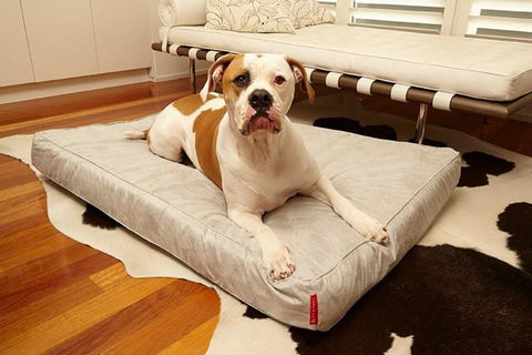 Image of Luxurious Beds with Dogs