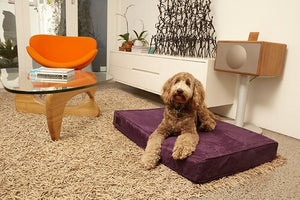 Luxurious Beds For Dogs