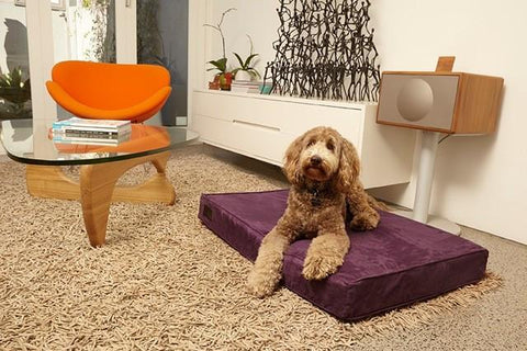 Image of Luxurious Beds For Dogs