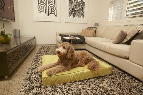 Yellow Velluto Dog Bed