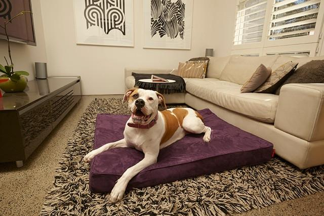 Velluto Dog For Beds
