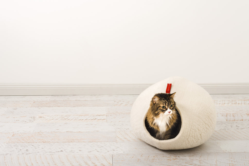 The Sogno bed for cats