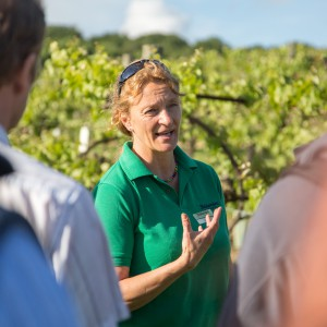 Vineyard Voucher - Private Guided Tour for 2
