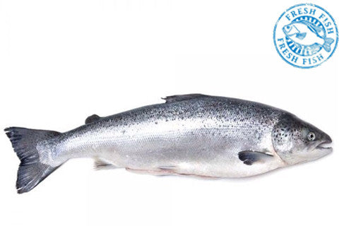 Whole Atlantic Salmon <br><b>$10.95/lb</b> approx. 10 lbs