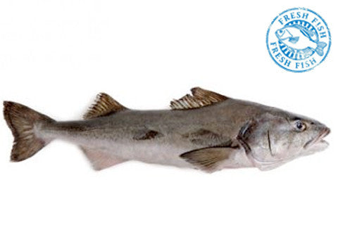 Canadian Whole Black Cod<br><b>$24.95/lb</b>