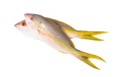 Whole Yellowtail Snapper (Whole Fish)<br><b>  $18.95/LB