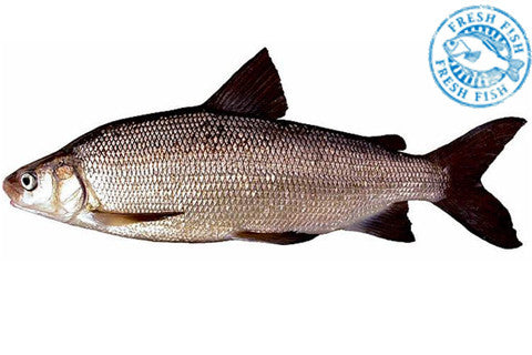 Whole Wild Ontario Whitefish Special<br><b>$12.95/lb</b>